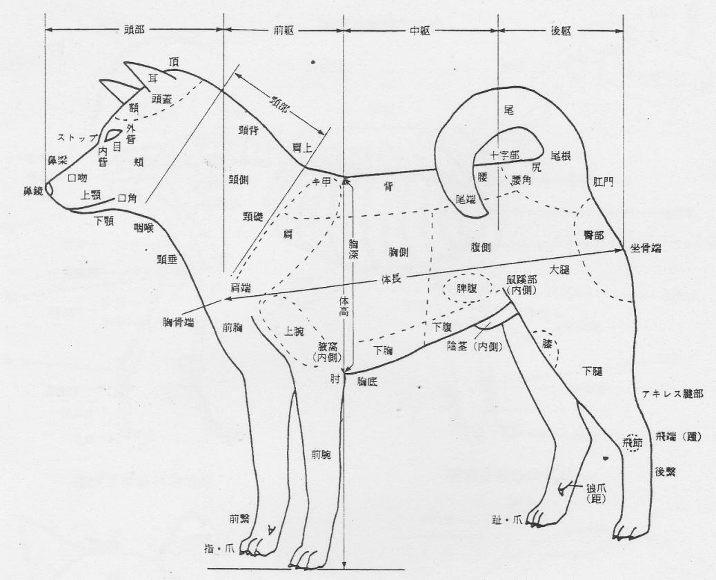 日本犬概要