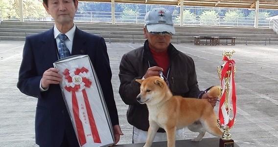 九州 豆柴 愛犬クラブ豆柴単独展
