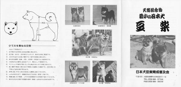 豆柴犬小冊子1